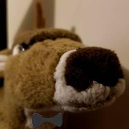 TeamDeer's avatar