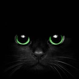 DarkScream[TR]'s avatar