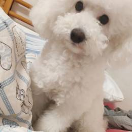 C.O.S-[005]MiaoMiao_OAO's avatar
