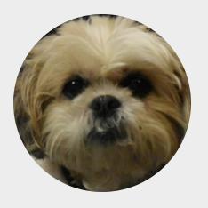 EHHVTC I Thomas29117's avatar