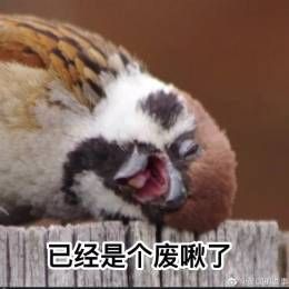 [Chenxi/399]*wooooood