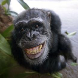 Monkeybro