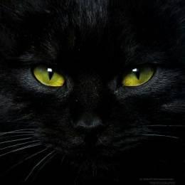 Szymon_007's avatar