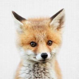 Pulikka The Fox's avatar