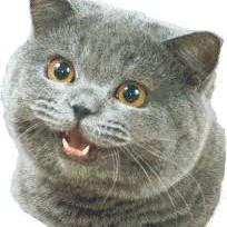 TheAnonymousCat's avatar