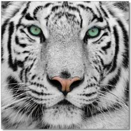 The White Tiger's avatar