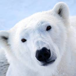 PolarBear [FIN]'s avatar