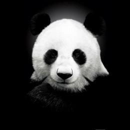中国Panda运输公司